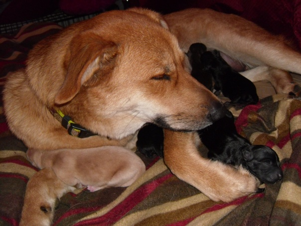 Sage's newborn puppies