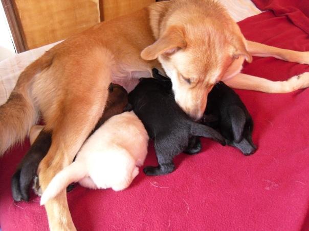 3/4/12 pups