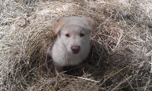 Big puppy!