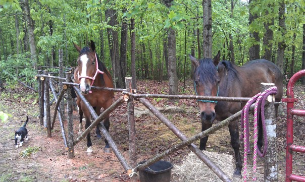 2 horses rescued from Camelot
